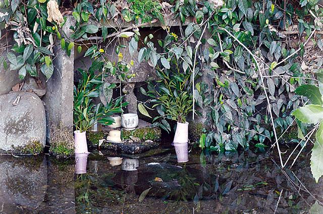 神井戸の湧水